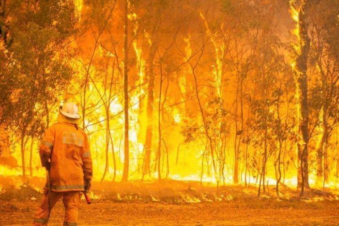 ユーカリ 自然 発火